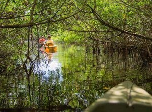 Touring Everglades National Park, Gulf Coast