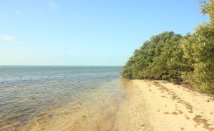 beach on park shore florida