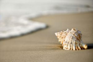 A Guide to Cleaning Seashells